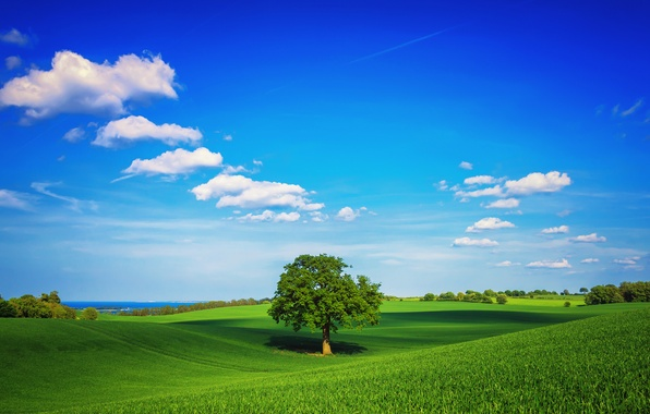 Picture greens, field, the sky, grass, clouds, tree, spring