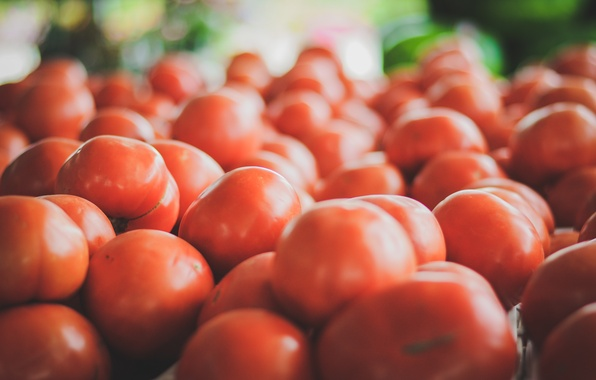 Picture red, tomatoes, tomatoes