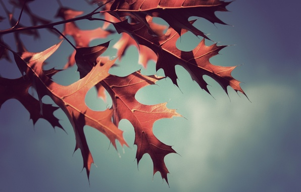 Picture autumn, leaves, macro, photo, background, Wallpaper