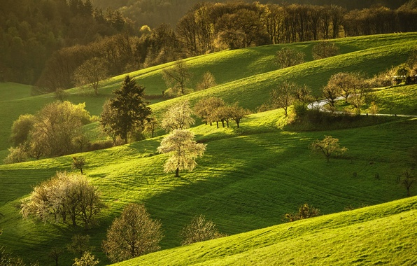 Picture road, greens, forest, grass, the sun, trees, hills, spring, Germany, flowering