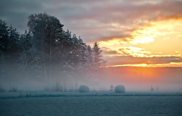 Picture winter, snow, trees, sunset, fog, Sweden, North