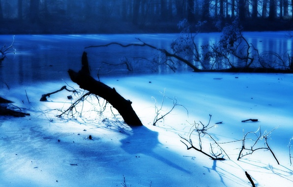 Picture Winter, Branches, Light, Blue, Ice, Frost, Frost