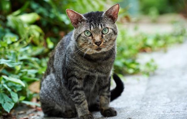 Picture greens, cat, cat, street, Kote
