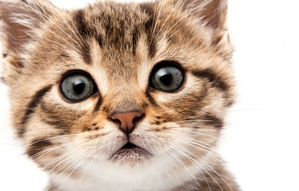 Picture cat, eyes, cat, look, face, kitty, muzzle