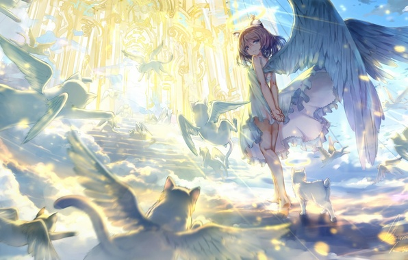 Picture animals, the sky, cat, girl, clouds, light, wings, angel, anime, art, ladder, temple, observerz