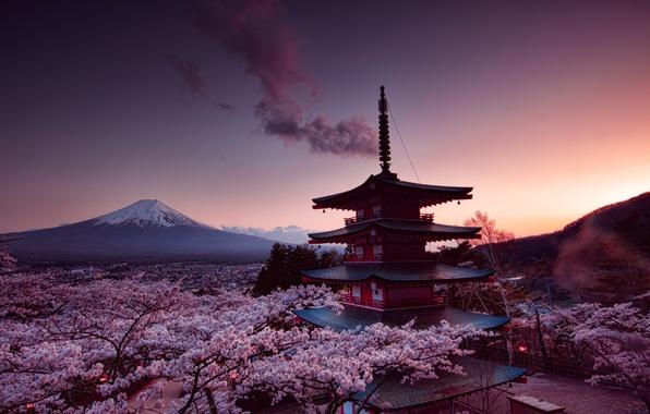 Picture sakura, fujiyama, Churei Tower