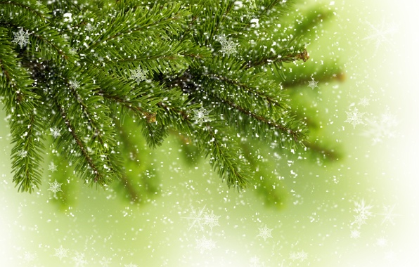 Picture winter, greens, snowflakes, tree, tree, spruce, branch, tree