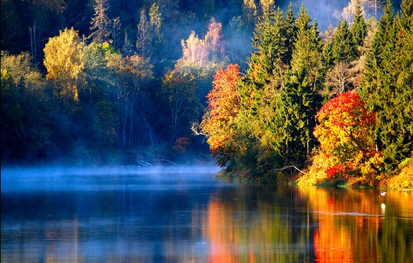 Picture autumn, forest, fog, river, bird, morning, Latvian autumn