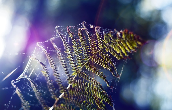 Picture nature, sheet, web, focus, fern, gossamer
