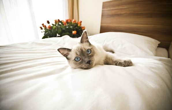 Picture animals, cat, bed