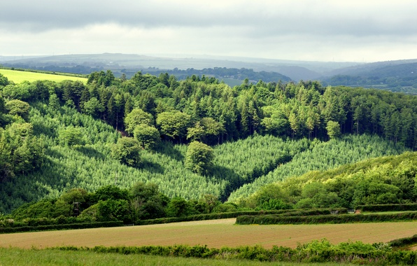 Picture field, forest, the sky, grass, trees, hills, horizon