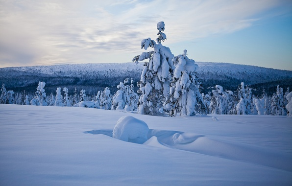 Picture winter, forest, snow, trees, panorama, the snow, Finland, Finland, Lapland, Lapland