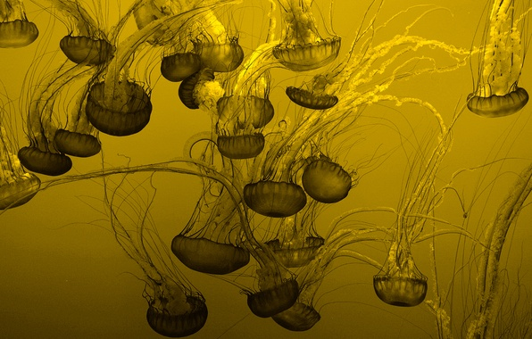 Picture background, jellyfish, a lot