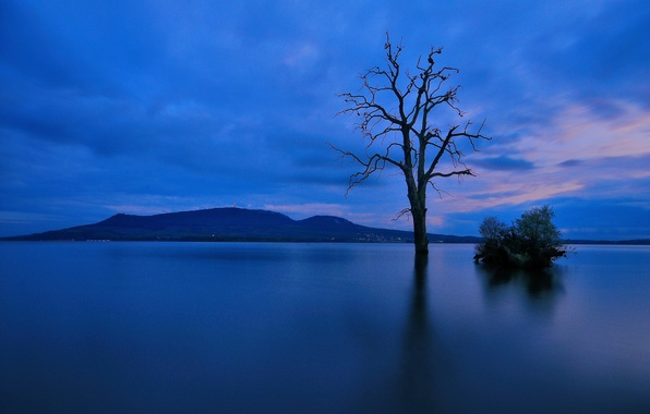 Picture lake, tree, mountain, the evening, twilight