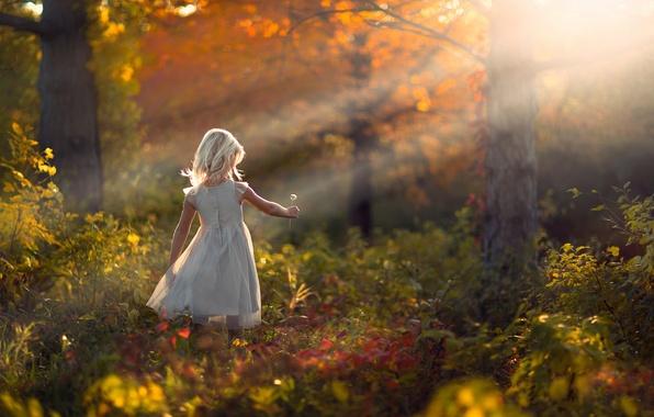 Picture autumn, forest, nature, dandelion, girl