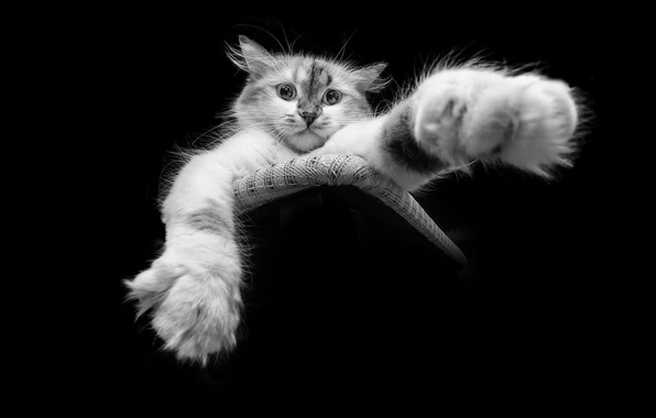 Picture cat, paw, black and white picture