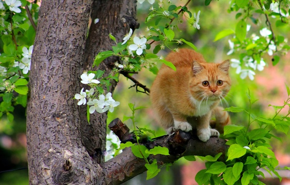 Picture cat, cat, tree, spring, red, flowering, on the tree, cats flew