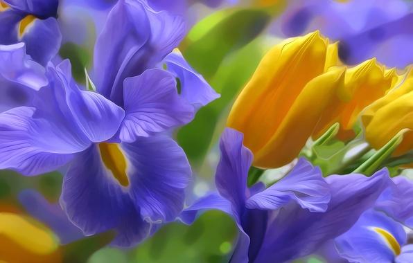 Picture light, nature, rendering, figure, Tulip, vector, petals, flowerbed, iris