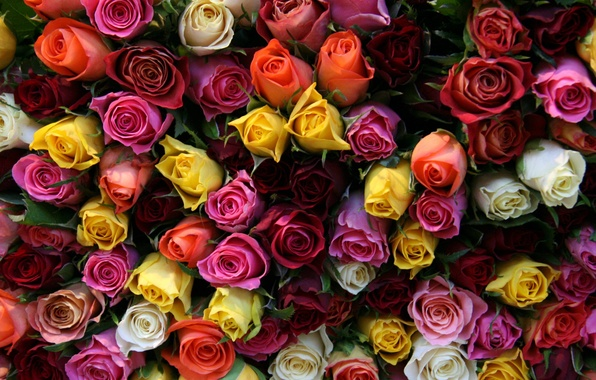 Picture flower, flowers, roses, bouquet, buds, beautiful, one million roses