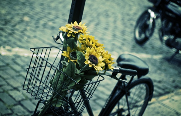 Picture leaves, flowers, blue, yellow, bike, background, widescreen, Wallpaper, basket, mood, sunflower, blur, contrast, wallpaper, flowers, …