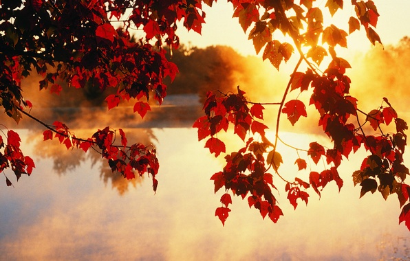 Picture autumn, leaves, the sun, rays, light, trees, beauty