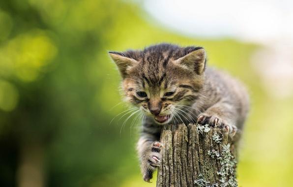 Picture baby, kitty, bokeh, pisklya