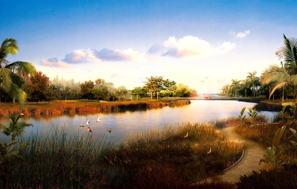 Picture birds, river, trail, 153