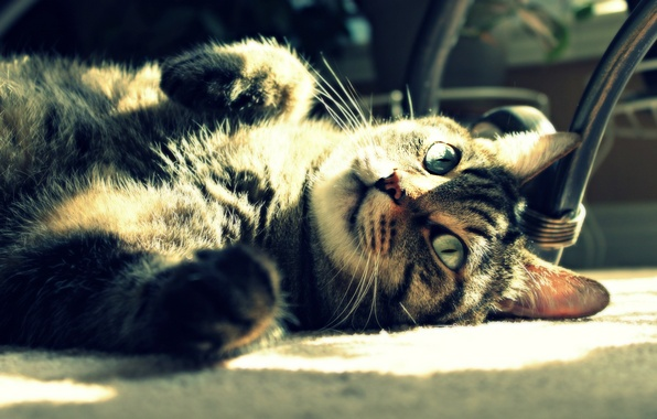 Picture cat, cat, the sun, light, stay, lies