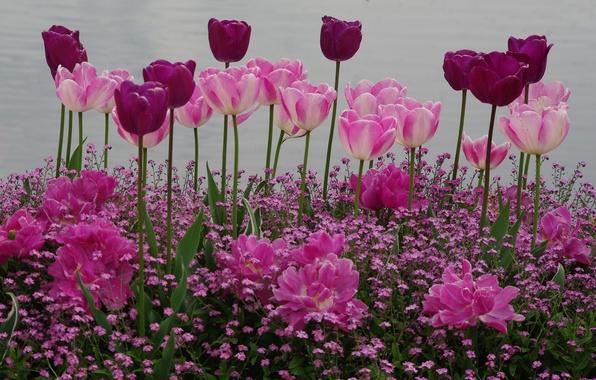Picture spring, garden, tulips, flowerbed