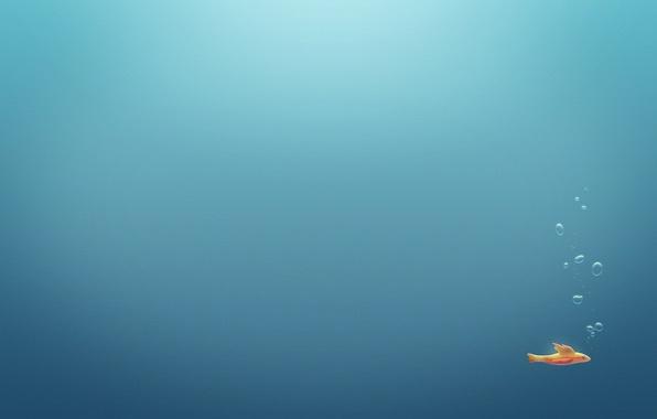 Picture sea, water, fish, bubbles, the ocean, minimalism, fish, bubble, underwater, pools, aquariums