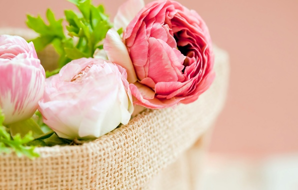 Picture leaves, flowers, petals, pink, white, bag, buds, peonies
