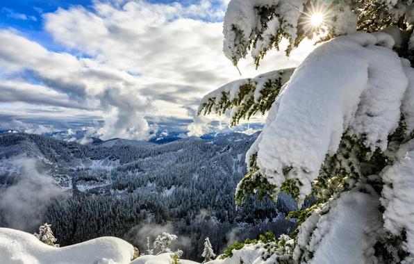 Picture winter, forest, clouds, snow, mountains, spruce, panorama, Washington, Washington, The cascade mountains, Cascade Range, Okanogan-Wenatchee …