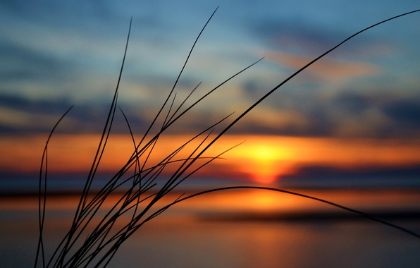 Picture the sky, grass, clouds, sunset, plant