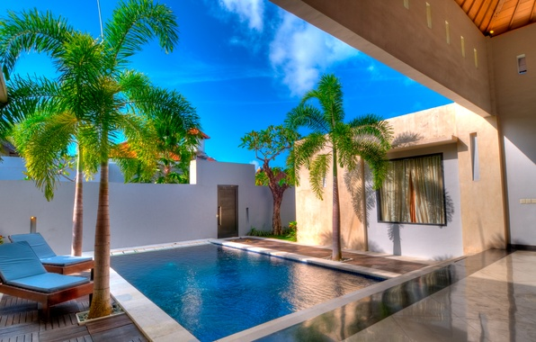 Picture palm trees, pool, yard, chaise