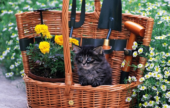 Picture cat, grass, cat, flowers, kitty, basket, cat