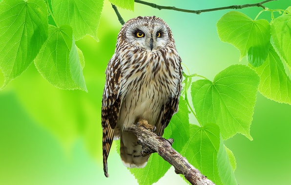 Picture leaves, nature, owl, bird, branch