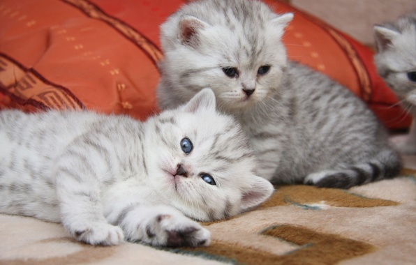 Picture cats, cute, kittens
