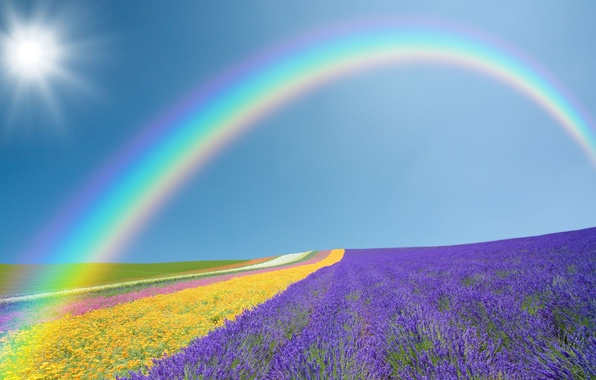 Picture field, purple, the sky, the sun, landscape, flowers, yellow, nature, green, background, widescreen, Wallpaper, field, …