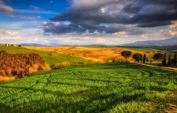 Photo wallpaper Sunny, meadows, field, Italy, trees, Tuscany, Tuscany, the sky, grass, clouds