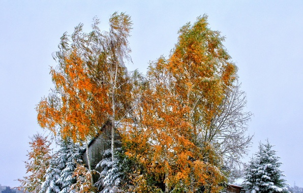Picture roof, autumn, the sky, leaves, snow, trees, house