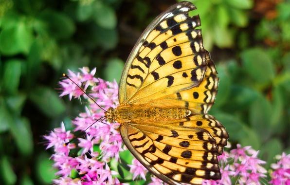 Picture flower, summer, flowers, butterfly, blur, pink, yellow, yellow, butterfly, wallpaper.