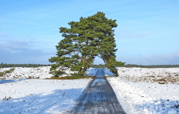 Picture road, field, the sky, snow, nature, tree, spring
