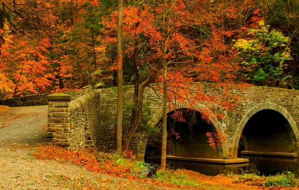 Picture road, autumn, forest, leaves, trees, bridge, nature, Park, colors, colorful, forest, road, trees, nature, bridge, …