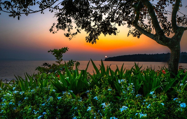 Picture sea, beach, sunset, flowers, tree, shore, the evening, India, horizon, the bushes, Goa, Bambolim beach