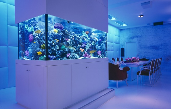 Picture fish, table, room, chairs, aquarium, corral, sea, interior, wardrobe.