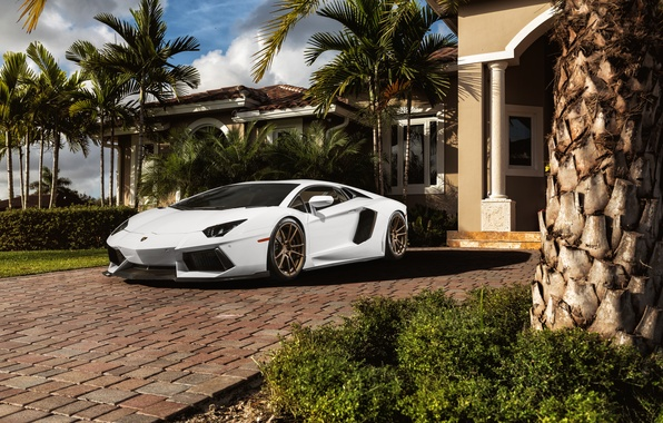 Wallpaper White Palm Trees Lamborghini Before White