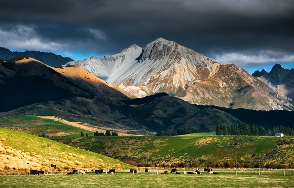 Picture the sky, mountains, clouds, cows, pasture, new Zealand, cattle, the herd, new Zealand