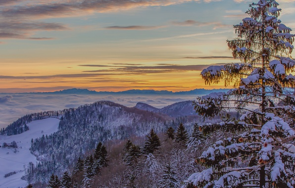 Picture winter, the sky, clouds, snow, trees, mountains, fog, spruce, glow