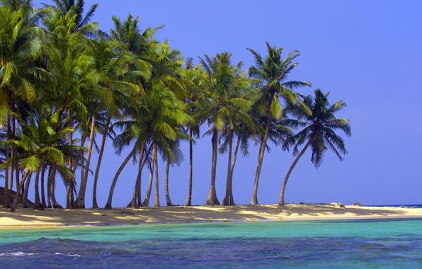 Picture sand, sea, beach, nature, tropics, palm trees, the ocean