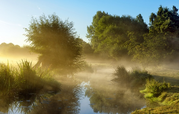 Picture the sky, trees, fog, pond, morning